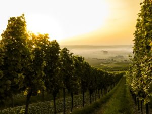 Impact of soil on wine quality