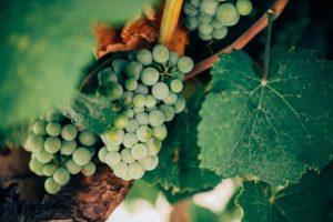 Tasting of wine in Italy